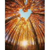 Fall Love Poster 50x70cm